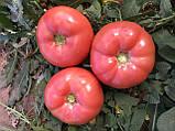 Семена томата Панамера F1, 250 семян, фото 2