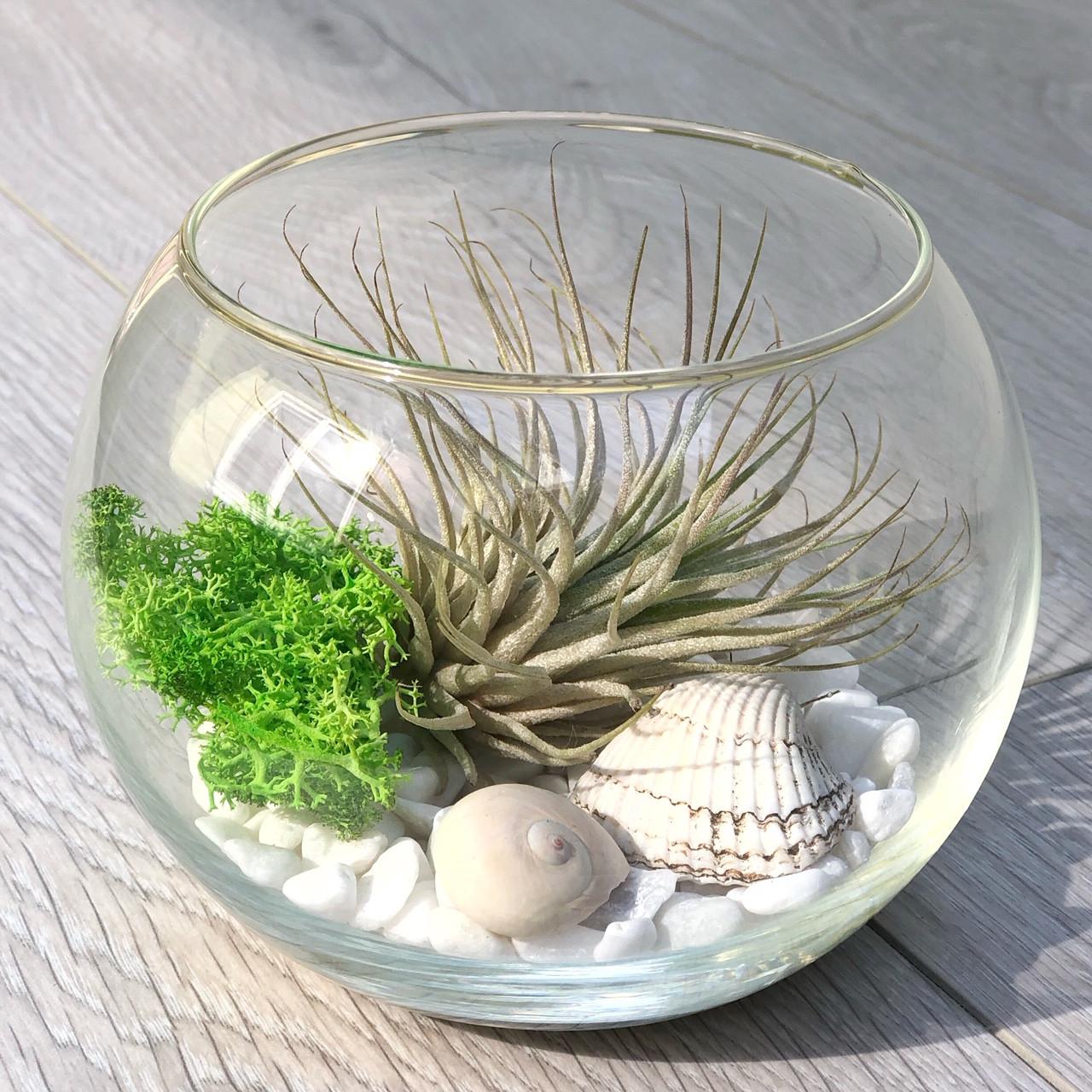 Флорариум с тилландсией Ионантой Green