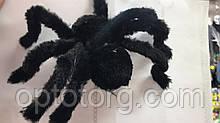 Паук бархатный маленький на Хэллоуин