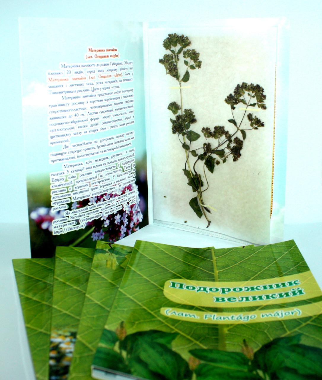 Гербарій колекція лікарські рослини