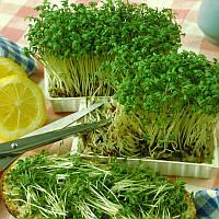 Набор для выращивания микро зелени в домашних условиях Гречка