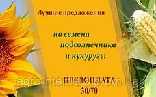 Семена подсолнечника и кукурузы украинской селекции по лучшим ценам