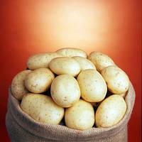 Семена картофеля Саванна Голландия, 5 кг