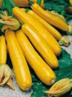 Семена кабачка Санлайт F1 1000 семян