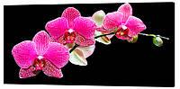 Картина на холсте Декор Карпаты Орхидея 50х100 см (c5)
