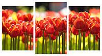 Модульная картина Декор Карпаты 100х53 см Красные тюльпаны (M3-с431)