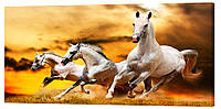 Картина на холсте Декор Карпаты Лошади 50х100 см (z181)