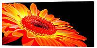 Картина на холсте Декор Карпаты Цветы 50х100 см (c39)