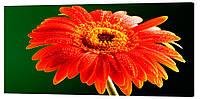 Картина на холсте Декор Карпаты Цветы 50х100 см (c37)