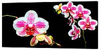 Картина на холсте Декор Карпаты Цветы 50х100 см (c680)