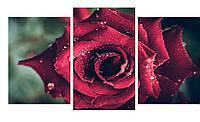 Модульная картина Декор Карпаты 100х53 см Роза (M3-t27)