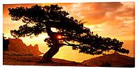 Картина на холсте Декор Карпаты Дерево на закате 50х100 см (p163)