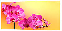 Картина на холсте Декор Карпаты Цветы 50х100 см (c23)