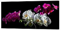 Картина на холсте Декор Карпаты Цветы 50х100 см (c20)