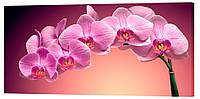 Картина на полотні Декор Карпати Квіти 50х100 см (c165)