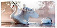 Картина на полотні Декор Карпати Лебеді 50х100 см (z1121)