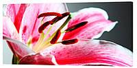 Картина на холсте Декор Карпаты Цветы 50х100 см (c19)