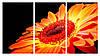 Модульная картина Декор Карпаты 100х53 см (M3-t39)