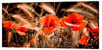 Картина на холсте Декор Карпаты Красные маки 50х100 см (c41)