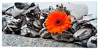 Картина на полотні Декор Карпати Камені і квітка 50х100 см (c266)