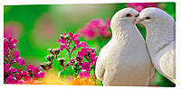 Картина на холсте Декор Карпаты Белые голуби 50х100 см (z1269)