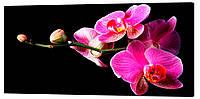 Картина на холсте Декор Карпаты Цветы 50х100 см (c2)