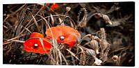 Картина на холсте Декор Карпаты Цветы 50х100 см (c564)