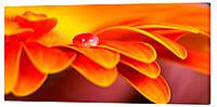 Картина на холсте Декор Карпаты Цветы 50х100 см (c35)