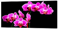 Картина на холсте Декор Карпаты Цветы 50х100 см (c40)