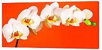 Картина на холсте Декор Карпаты Цветы 50х100 см (c715)