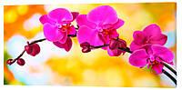 Картина на холсте Декор Карпаты Цветы 50х100 см (c32)