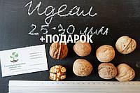 """Семена грецкий орех сорт """"Идеал"""" (10 штук калибр 25-30 мм) на саженцы, насіння волоський горіх на саджанці"""