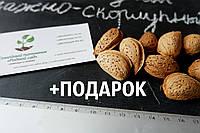 Миндаль сладкий семена (10шт) (насіння мигдаля для саджанців)семечка, косточка для выращивания саженцев