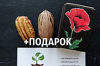 Пекан семена (10 штук) орех кария для саженцев, Carya illinoinensis горіх карія пекан +инструкция