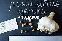Рокамболь испанский семена (детки) (10 штук) (слоновий чеснок) гигантский лук-чеснок, насіння часнику