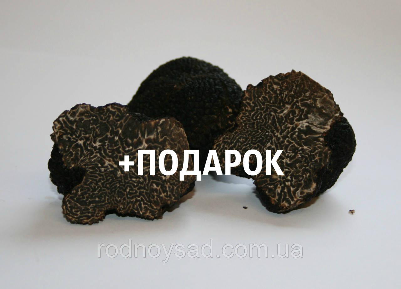 Мицелий чёрного трюфеля гриб Tuber melanosporum семена (перигорский или французский) настоящий 0,5 литра
