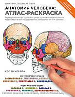 Анатомия человека. Атлас-раскраска. Медицинский атлас