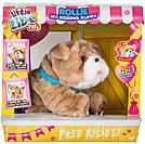 Интерактивный щенок Ролли Люблю целоваться Оригинал Little Live Pets My Kissing Puppy Rollie, фото 6