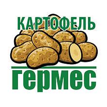 """Семенной картофель ТД """"Гермес"""""""