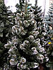 """Искусственная елка 2,5 метра """"кончик ветки в снегу"""" на подставке, фото 3"""