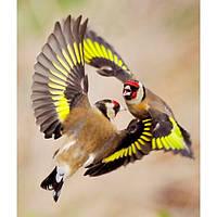 Певчие птицы.