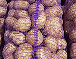 Семенной картофель Саванна 5 кг, Голландия, 1 репродукция (оригинал), фото 6