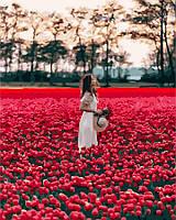 Картина по номерам Brushme 40х50 Девушка в поле тюльпанов Лиссе (GX24932), фото 1