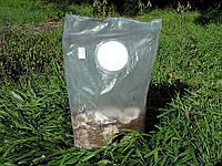 Блок для выращивания экзотических грибов, фото 1