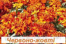 Чорнобривці Сафарі болеро (вибір кольору) 1000 шт.