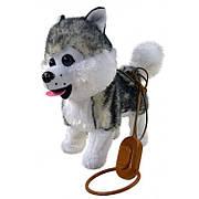 Детская музыкальная собачка Хаски на поводке 3693: ходит, гавкает, машет хвостиком, поет на русском языке