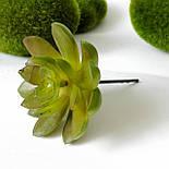 Суккуленты искусственные  6.5 см, фото 2