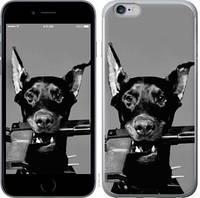 """Чехол на iPhone 6s Plus Доберман """"2745c-91-25032"""""""