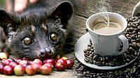 Kopi Luwak - самый дорогой кофе в мире
