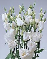 Семена Эустома белая АВС 3 F1 50 гранул, Pan American